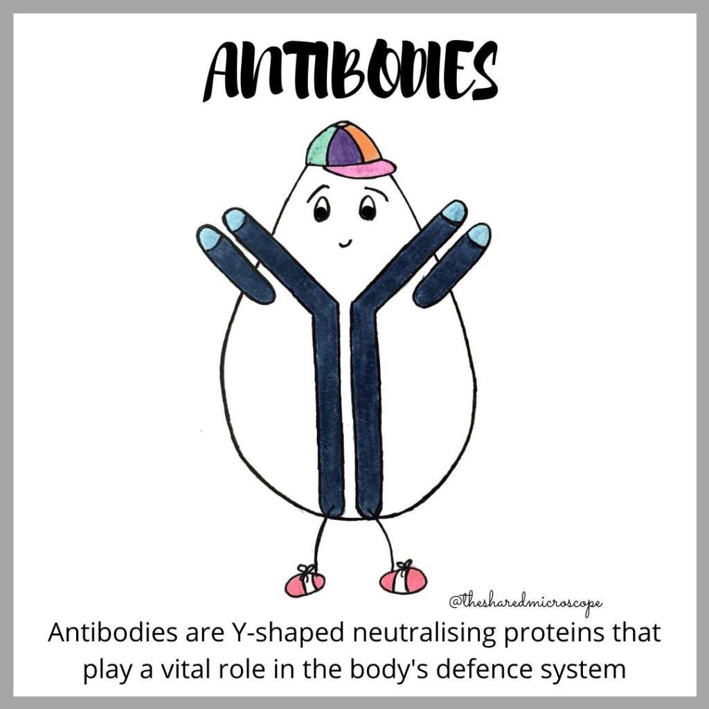 how antibodies work -- fancy comma blog