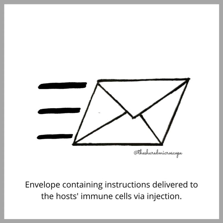 ilustración de ARNm mensajero en la vacuna Moderna. la vacuna se inyecta en nuestros cuerpos, entregando las instrucciones para producir proteínas de punta directamente a nuestras células.