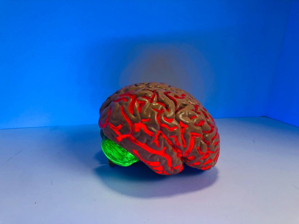 photo of an illuminated replica of the human brain
