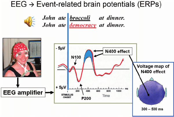 diagram showing the N400 waveform, as measured by event-related potentials (ERP), which is one way to look at EEG data
