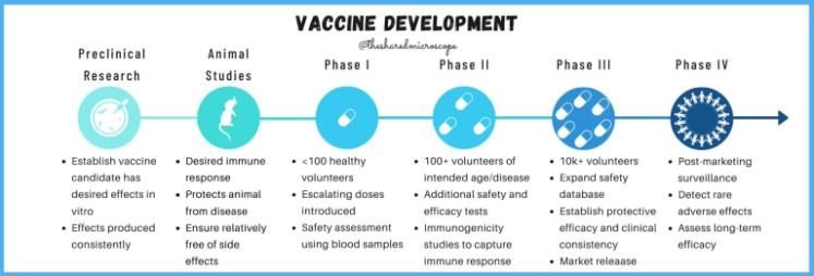 ilustración cronograma de desarrollo de vacunas, desde la investigación de laboratorio preclínica hasta los ensayos clínicos con seres humanos.