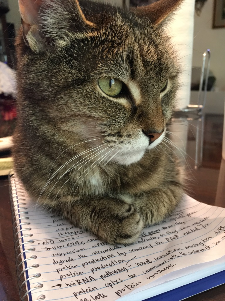 photo of a cat sitting on a notebook